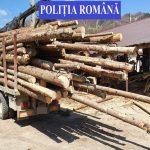 Polițiști din opt județe au verificat activitatea firmelor sucevene de exploatare a lemnului.Peste 3.000 metri cubi confiscați în zona Moldovița