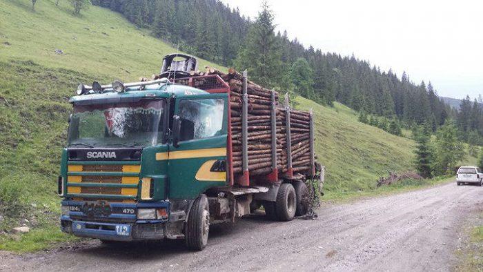 Bușteni și autocamion confiscați la Rîșca pentru avize false de însoțire