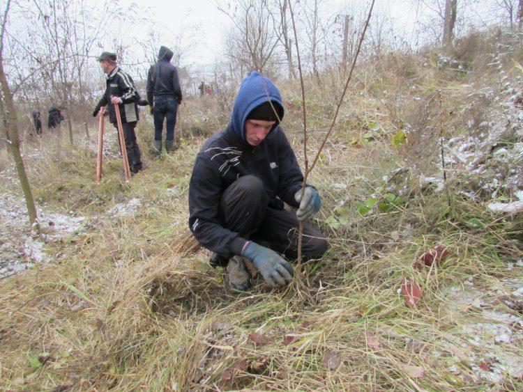 8.800 de puieți plantați pe terenuri degradate în Fălticeni
