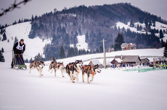 Sănii trase de câini în pasul Tihuța
