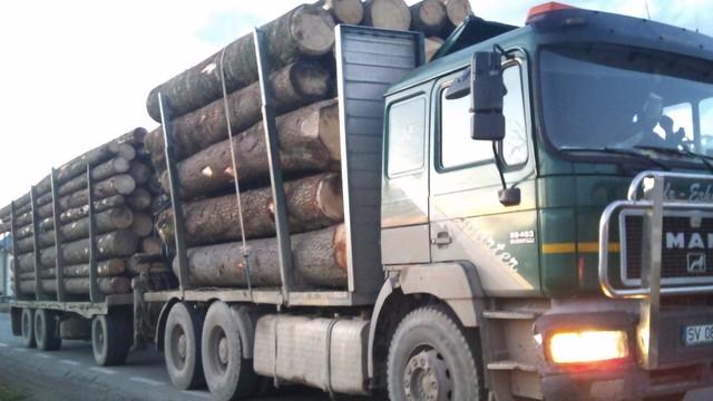 Transport ilegal de 22 metri cubi de buștean oprit de polițiști la Gura Humorului