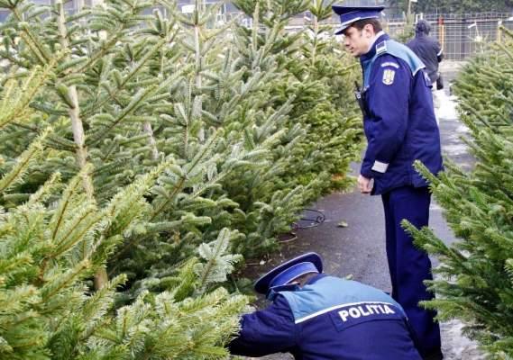 32 de pomi de Crăciun confiscați în piața Verești