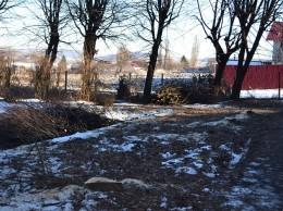 Copaci taiati la Nada Florilor 18.02.2015