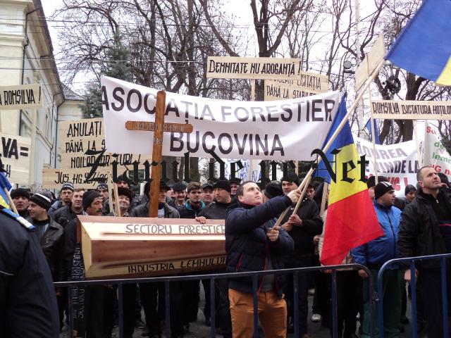 Intrigi în sectorul silvic. România îşi sabotează propria economie