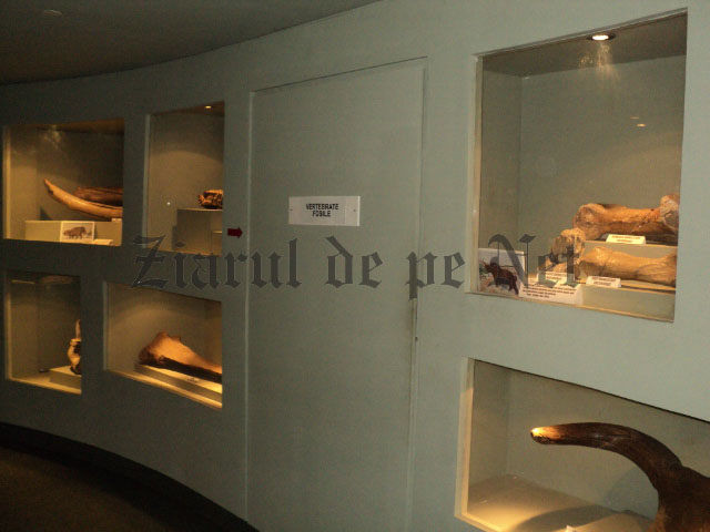 Muzeul de Stiintele Naturii Suceava mai 2015 (12)