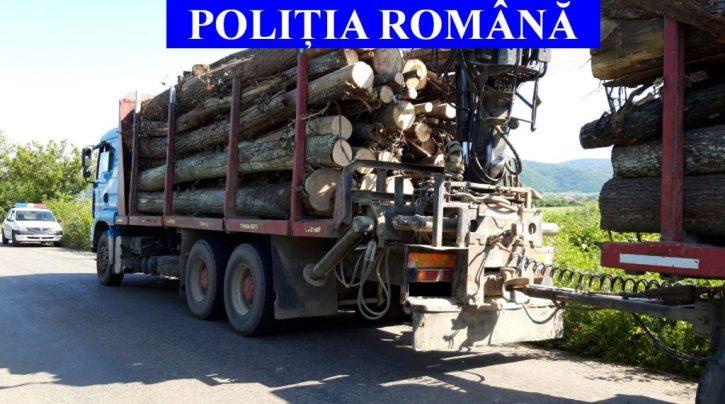 Dosar penal și amendă de 22.000 lei pentru o firmă din Pojorâta care efectua curse nelegale de material lemnos