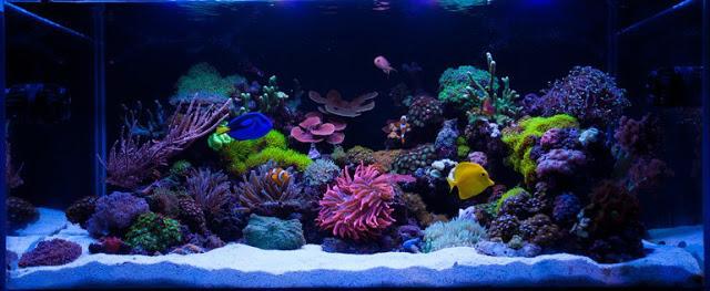 acvarii marine