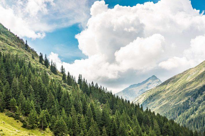Ambasada Franţei şi Institutul Francez, conferinţă pe tema biodiversităţii forestiere la Suceava