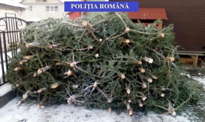 Brazi fără acte, confiscați la Valea Moldovei