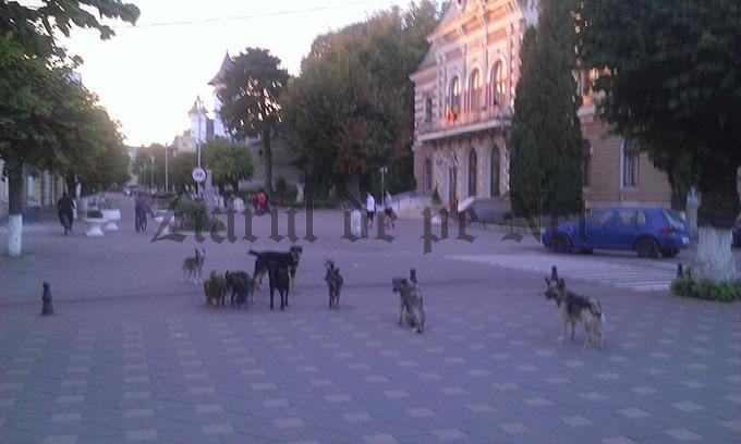 caini comunitari in Falticeni septembrie 2015