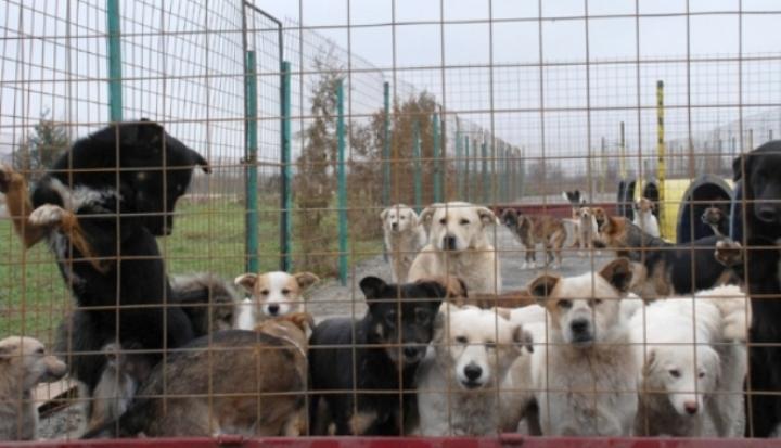Maxim 500 de câini comunitari în adăpostul din Suceava.Primăriava semna un nou contract cu Pro Animals Tina