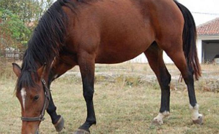 Supărat că nu a primit destul la moștenire, un bărbat din Șcheia i-a furat un cal fratelui său