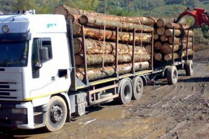 Polițiștii din Vadu Moldovei au confiscat un transport de bușteni de 50 metri cubi