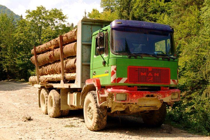 Sancțiuni de peste 250.000 lei aplicate de polițiștii suceveni pentru infracțiuni cu material lemnos