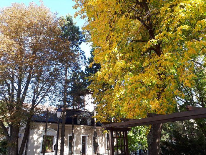 "Proiect ""Francofonia în comunitate"" la Suceava"