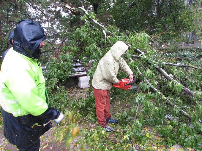 Copaci doborâți de vânt la Suceava și Argestru