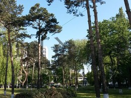 crengi taiate Suceava parc spital