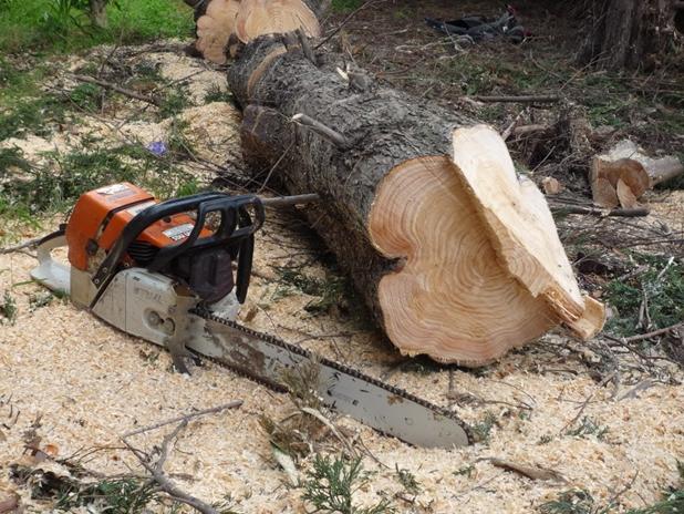 Trei bărbați depistați că taie ilegal arbori în pădurea Adâncata