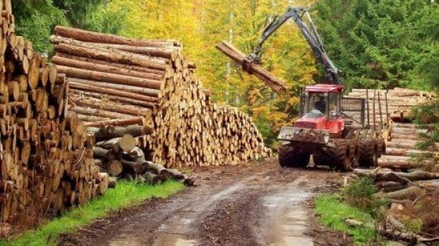 Patronul unei firme de exploatarea lemnului din Cornu Luncii, amendat cu 12.000 de lei pentru mai multe nereguli și i s-au confiscat 130 mc de lemn