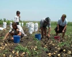 fermieri 4