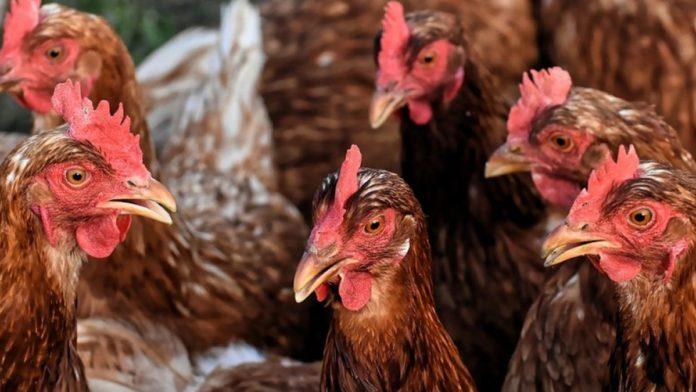 DSP Suceava atrage atenția asupra gripei aviare: spălați-vă cât mai des pe mâini cu apă și săpunși cumpărați carne de pasăre, ouă și produse din carne de pasăre numai din magazine autorizate