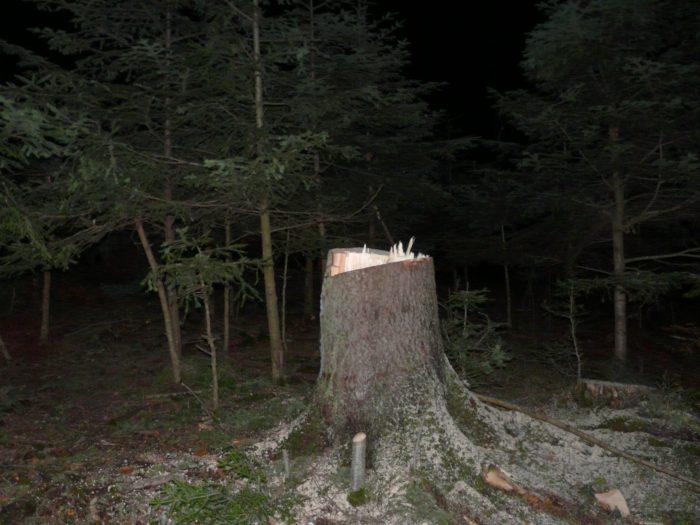 Sucevenii taie ilegal din păduri tot mai mult lemn de foc