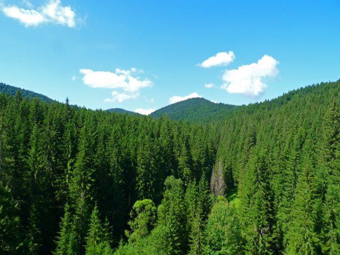 Partidul Verde Suceava este de acord cuinterzicerea exploatărilor forestiere timp de 10 ani în România