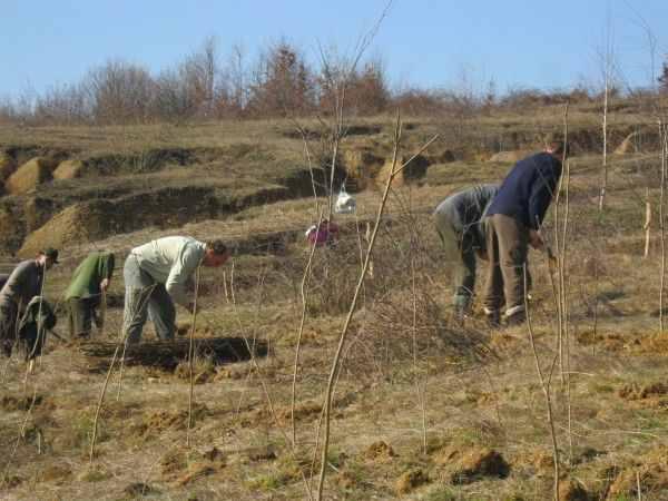 O nouă campanie de împăduriri în județul Suceava