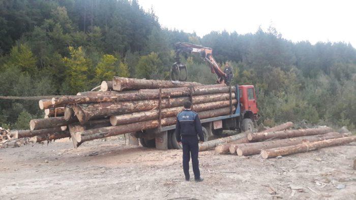 Transporturi ilegale cu lemn date în vileag de pândari, la Sucevița