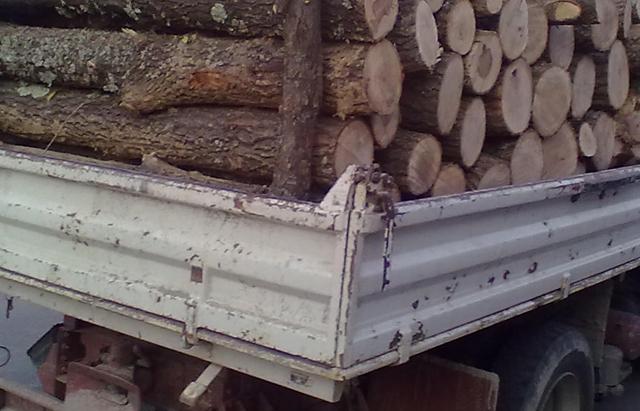 Transport de lemn de foc fără documente depistat de polițiști la Coșna