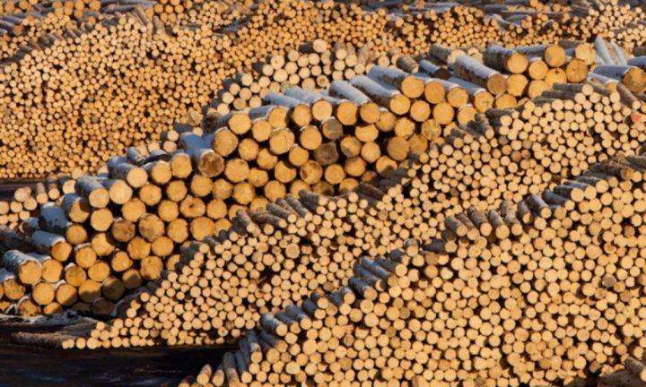 Sancțiuni de peste 160.000 lei aplicate firmelor din județul Suceava care exploatează material lemnos