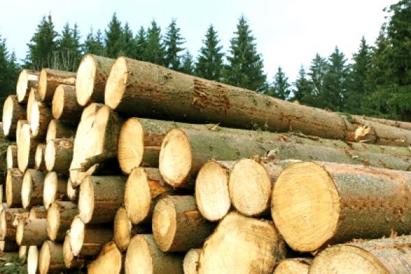 Sancțiuni de 10.000 lei pentru material lemnos transportat ilegal, la Valea Moldovei