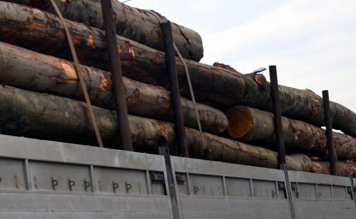Nereguli cu material lemnos depistate de polițiștii suceveni