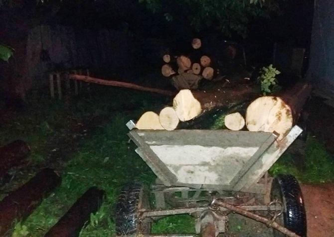 Bărbați din Mitocu Dragomirnei depistați de polițiști cu două căruțe de lemne furate