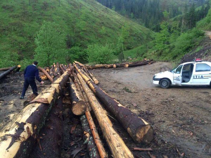 Controale la o firmă din Râșca : Inspectoratul de Poliție și Garda Forestieră au amendat atât administratorul, cât și personalul silvic responsabil