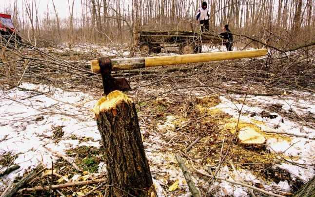 Un tânăr din Pătrăuți s-a ales cu dosar penal după ce a tăiat un arbore
