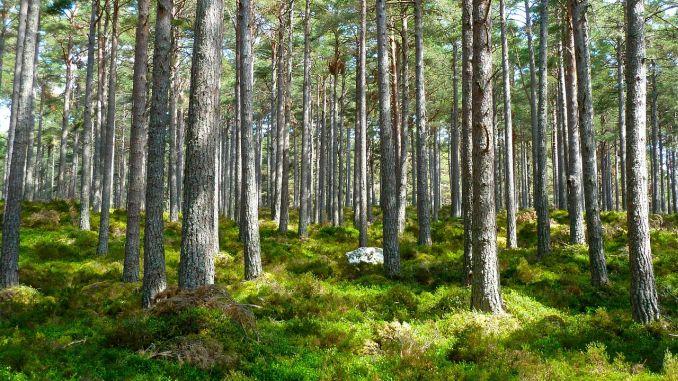2.592 hectare de pădure regenerate în județul Suceava, anul trecut