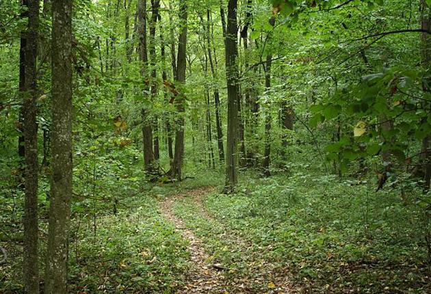 Proprietarii de păduri, amenzi de până la 5.000 lei dacă nu incheie contracte de pază cu ocoalele silvice