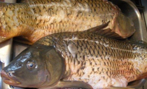 Pește și conserve din pește confiscate de polițiști, în municipiul Suceava