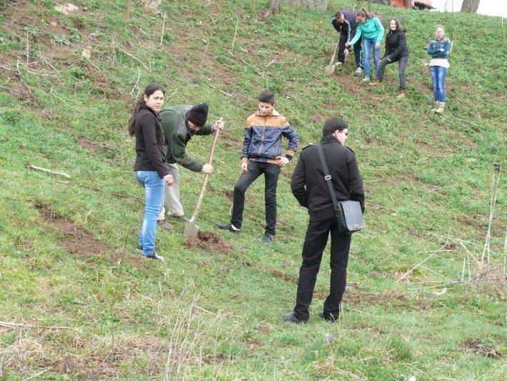 Plantările de arbori în județul Suceava încep în jurul municipiului reședință