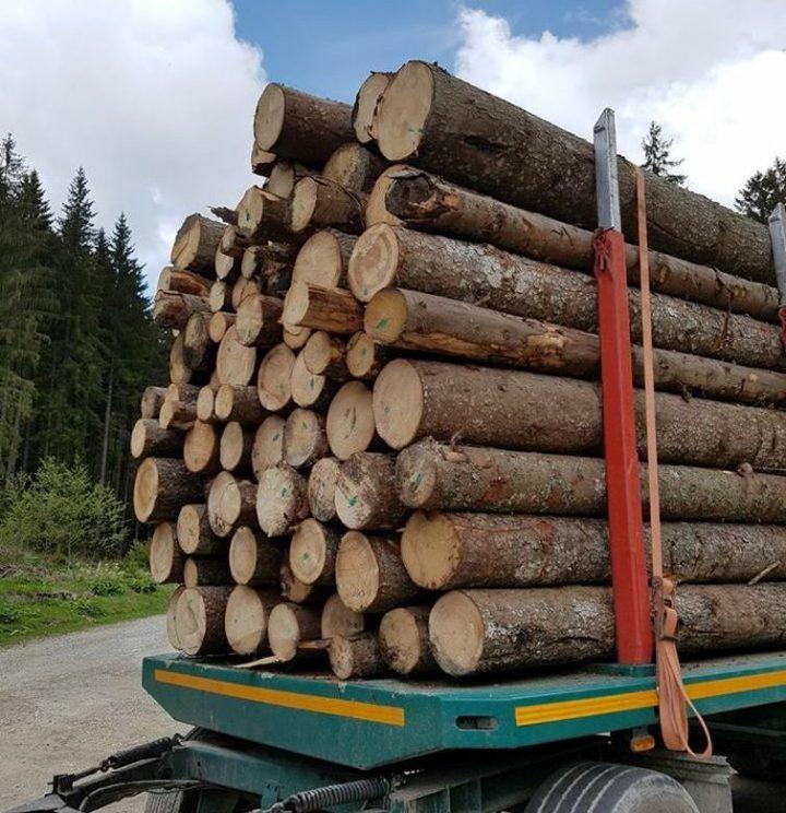 Nereguli cu material lemnos la Dorna Candrenilor și Broșteni