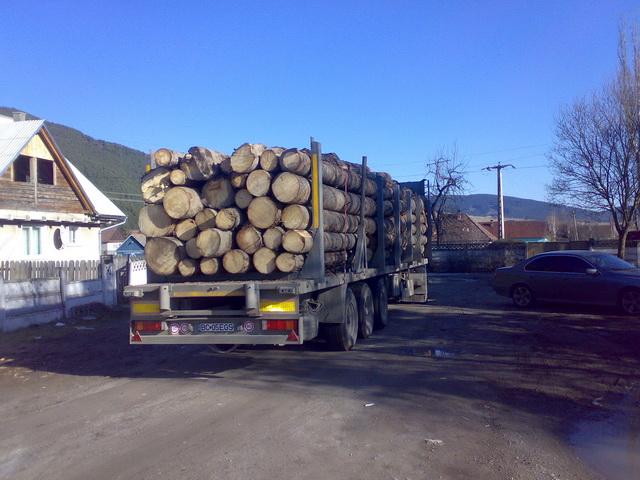 Nereguli cu material lemnos sancționate de polițiștii suceveni